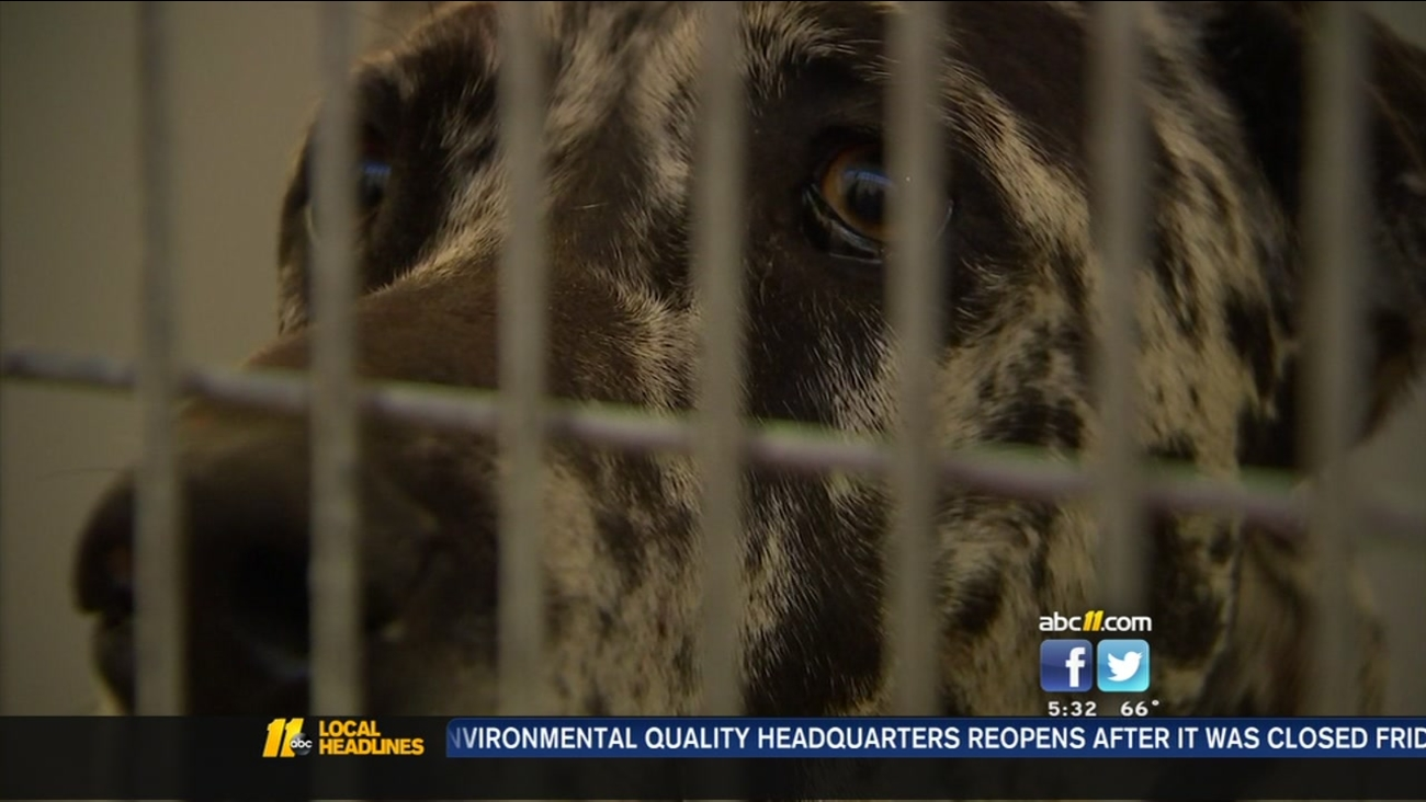 Two great danes attacked a Fort Bragg worker as she was jogging.
