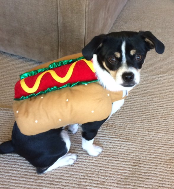 "<div class=""meta image-caption""><div class=""origin-logo origin-image none""><span>none</span></div><span class=""caption-text"">A puppy wears a hot dog costume in this undated image. (Photo submitted to KGO-TV by @hotdiggitymarin/Twitter)</span></div>"