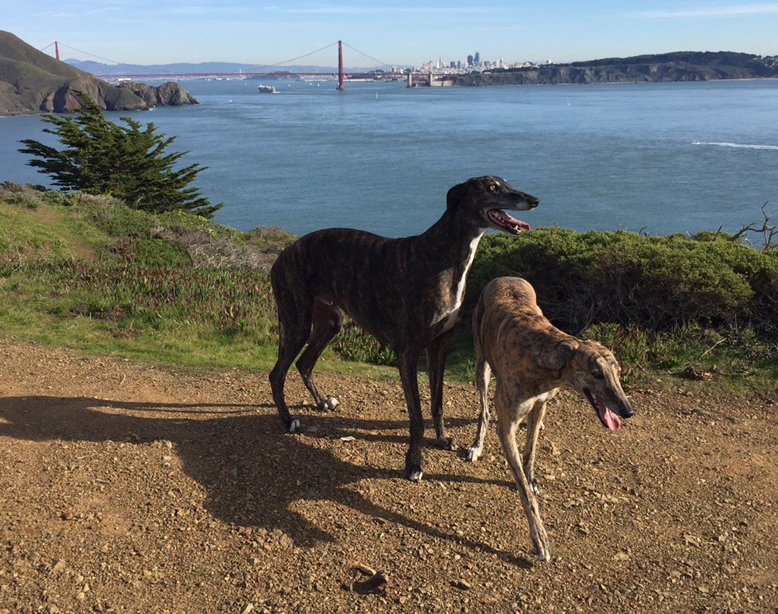 "<div class=""meta image-caption""><div class=""origin-logo origin-image none""><span>none</span></div><span class=""caption-text"">The I-Team's Dan Noyes' dogs appear near the Golden Gate Bridge in this undated image. (Photo submitted to KGO-TV by @DanNoyes/Twitter)</span></div>"