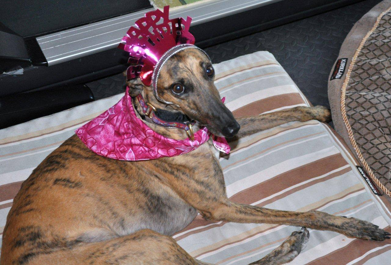 <div class='meta'><div class='origin-logo' data-origin='none'></div><span class='caption-text' data-credit='Photo submitted to KGO-TV by Pamela Buck/Facebook'>Luna the dog wears a Happy Birthday crown in this undated image.</span></div>
