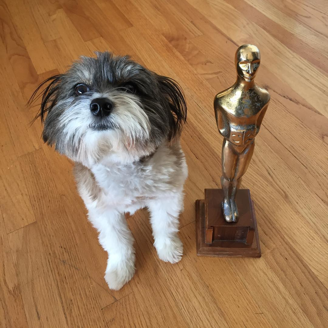 "<div class=""meta image-caption""><div class=""origin-logo origin-image none""><span>none</span></div><span class=""caption-text"">Wilson the dog celebrates the Oscars in this undated image. (Photo submitted to KGO-TV by @wilson_in_the_city/Instagram)</span></div>"