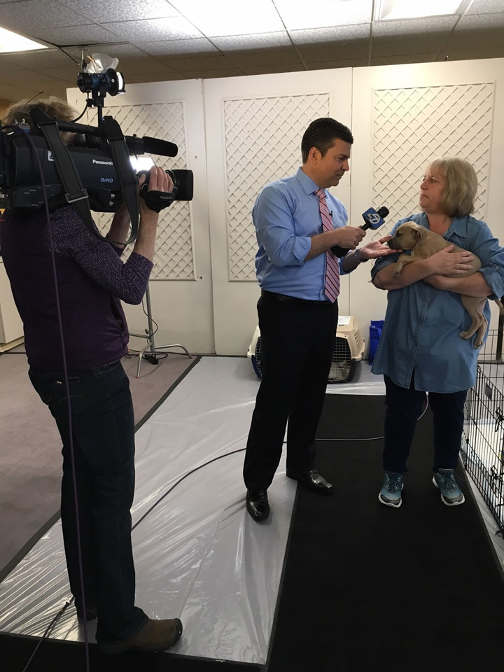 <div class='meta'><div class='origin-logo' data-origin='none'></div><span class='caption-text' data-credit='KGO-TV'>Meteorologist Mike Nicco is seen holding a puppy at ABC7's adoption event with our Perfect Pet partners in honor of National Puppy Day in San Francisco on Thursday, March 23, 2017.</span></div>