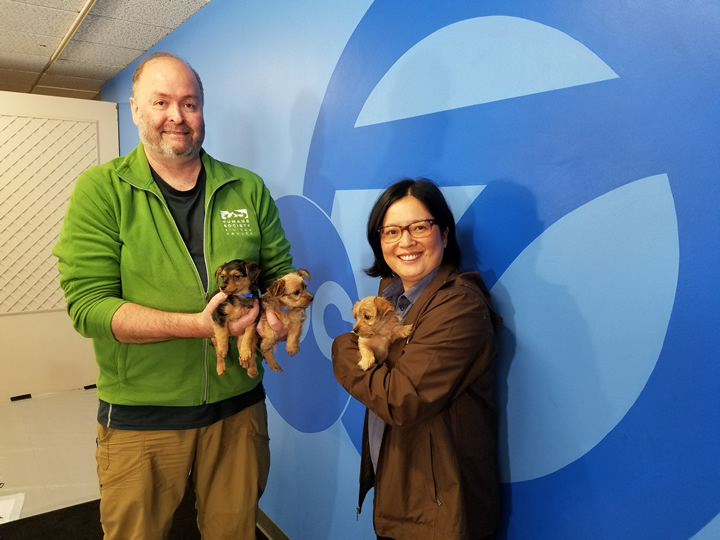 <div class='meta'><div class='origin-logo' data-origin='none'></div><span class='caption-text' data-credit='@kklo333/Twitter'>ABC7 is holding an adoption event with our Perfect Pet partners in honor of National Puppy Day in San Francisco on Thursday, March 23, 2017.</span></div>