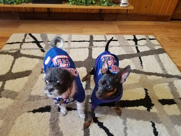 <div class='meta'><div class='origin-logo' data-origin='none'></div><span class='caption-text' data-credit=''>Our ABC 7 Chicago Facebook fans shared photos of their furry friends with us for National Puppy Day!</span></div>