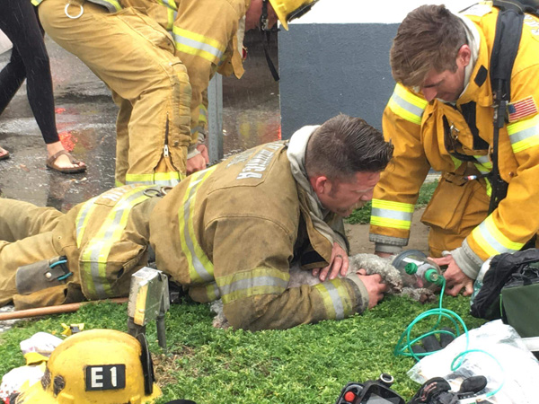 "<div class=""meta image-caption""><div class=""origin-logo origin-image none""><span>none</span></div><span class=""caption-text"">California firefighters who spent 20 minutes performing mouth-to-snout resuscitation on a dog they rescued from a burning apartment are being hailed as heroes. (@billy_fernando/Instagram)</span></div>"