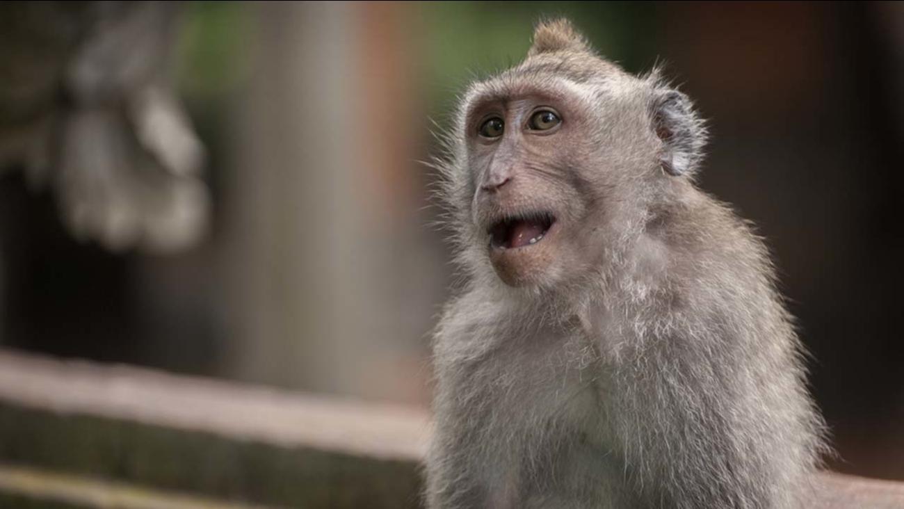It Got Grandma Chimp Throws Poop On Womans Face Abc13com