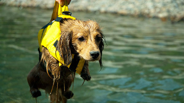 """<div class=""""meta image-caption""""><div class=""""origin-logo origin-image """"><span></span></div><span class=""""caption-text"""">They don't call 'em """"Dog days of summer"""" for nothing.</span></div>"""