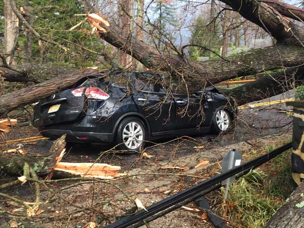 <div class='meta'><div class='origin-logo' data-origin='none'></div><span class='caption-text' data-credit=''>A tree fell and crushed a car in Greenville, Delaware during Thursday's storm.</span></div>