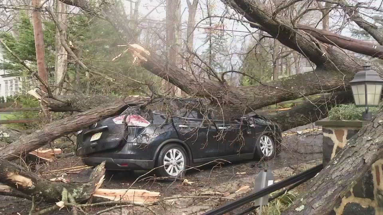 Tree crushes car in Greenville