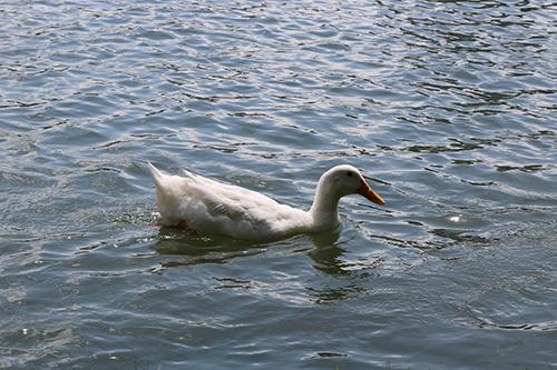 <div class='meta'><div class='origin-logo' data-origin='KTRK'></div><span class='caption-text' data-credit='Danny Clemens'>McGovern Lake is teeming with wildlife.</span></div>