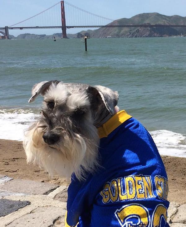 "<div class=""meta image-caption""><div class=""origin-logo origin-image none""><span>none</span></div><span class=""caption-text"">Golden State Warriors fans sent in their pics using #DubsOn7 or #abc7now to cheer on the Dubs during their 2016-2017 season.</span></div>"