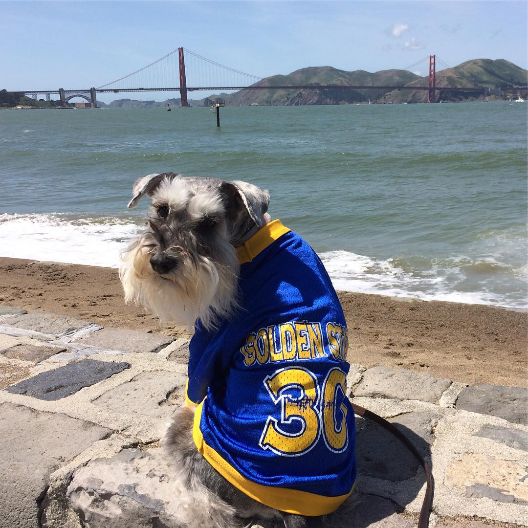 "<div class=""meta image-caption""><div class=""origin-logo origin-image none""><span>none</span></div><span class=""caption-text"">Golden State Warriors fans are showing their spirit by tagging their photos #DubsOn7. (gandalf.the.minischnauzer/Instagram)</span></div>"