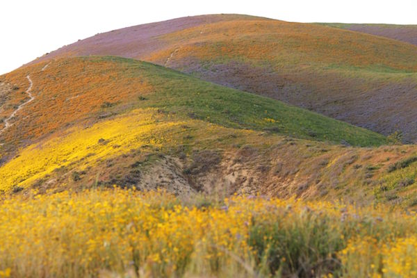 <div class='meta'><div class='origin-logo' data-origin='Creative Content'></div><span class='caption-text' data-credit='ROBYN BECK/AFP/Getty'>Wildflowers cover this hills of the Tremblor Range in Carrizo Plain National Monument near Taft, California during a wildflower 'super bloom,' April 12, 2017.</span></div>