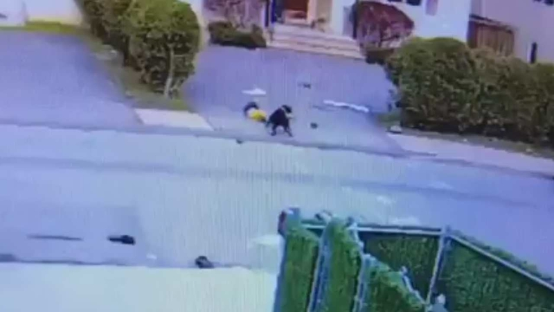 Video captures toddler being attacked by pit bull