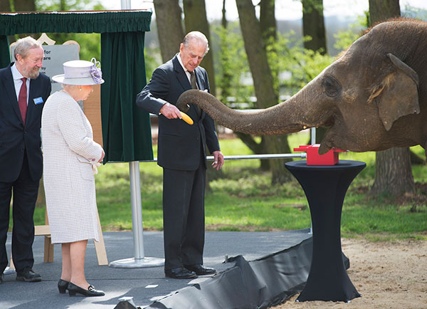 "<div class=""meta image-caption""><div class=""origin-logo origin-image none""><span>none</span></div><span class=""caption-text"">Britain's Queen Elizabeth II watches her husband the Duke of Edinburgh feeding a banana to and elephant at the Zoological Society of London's Whipsnade Zoo. (David Rose//Pool Photo via AP)</span></div>"