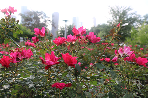 <div class='meta'><div class='origin-logo' data-origin='KTRK'></div><span class='caption-text' data-credit='Danny Clemens'>Buffalo Bayou Park is teeming with Texas-native plants.</span></div>