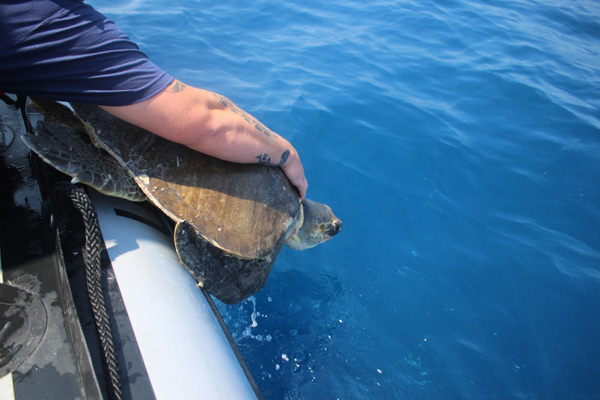 "<div class=""meta image-caption""><div class=""origin-logo origin-image none""><span>none</span></div><span class=""caption-text"">A U.S. Coast Guard crew rescued four endangered sea turtles that had become entangled in garbage in the Pacific Ocean. (U.S. Coast Guard District 11)</span></div>"