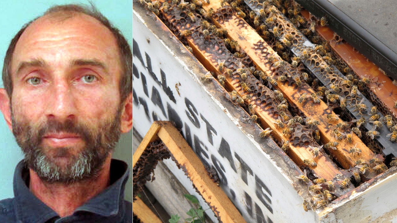This undated photo, left, shows Pavel Tveretinov. Several of the thousands of recovered beehives stolen in California are shown in this May 16, 2017, photo near Sanger, Calif.