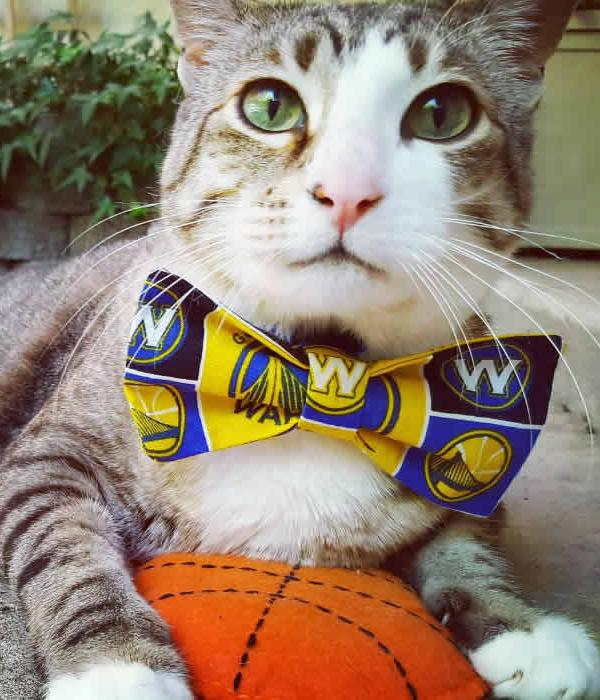 "<div class=""meta image-caption""><div class=""origin-logo origin-image none""><span>none</span></div><span class=""caption-text"">Pecan the Nut is seen wearing a Warriors bow tie on Sunday, May 21, 2017. (Photo submitted to KGO-TV by @pecanthenut/Instagram)</span></div>"