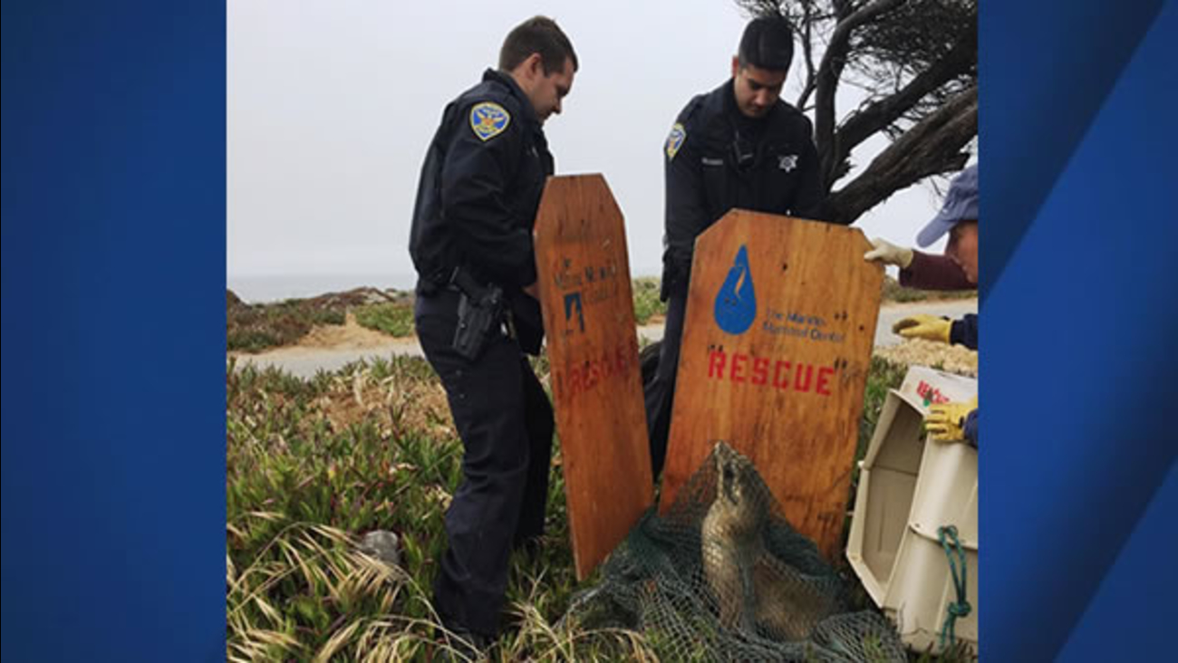 Police officers help rescue a baby seal along the Great Highway in San Francisco on Monday, May 22, 2017.