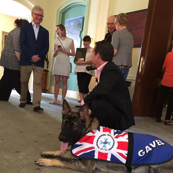 <div class='meta'><div class='origin-logo' data-origin='none'></div><span class='caption-text' data-credit='Governor of Queensland'>Gavel was too friendly for police work and flunked out of police dog academy. However, he landed firmly on his paws and found a new job that perfectly matched his personality.</span></div>