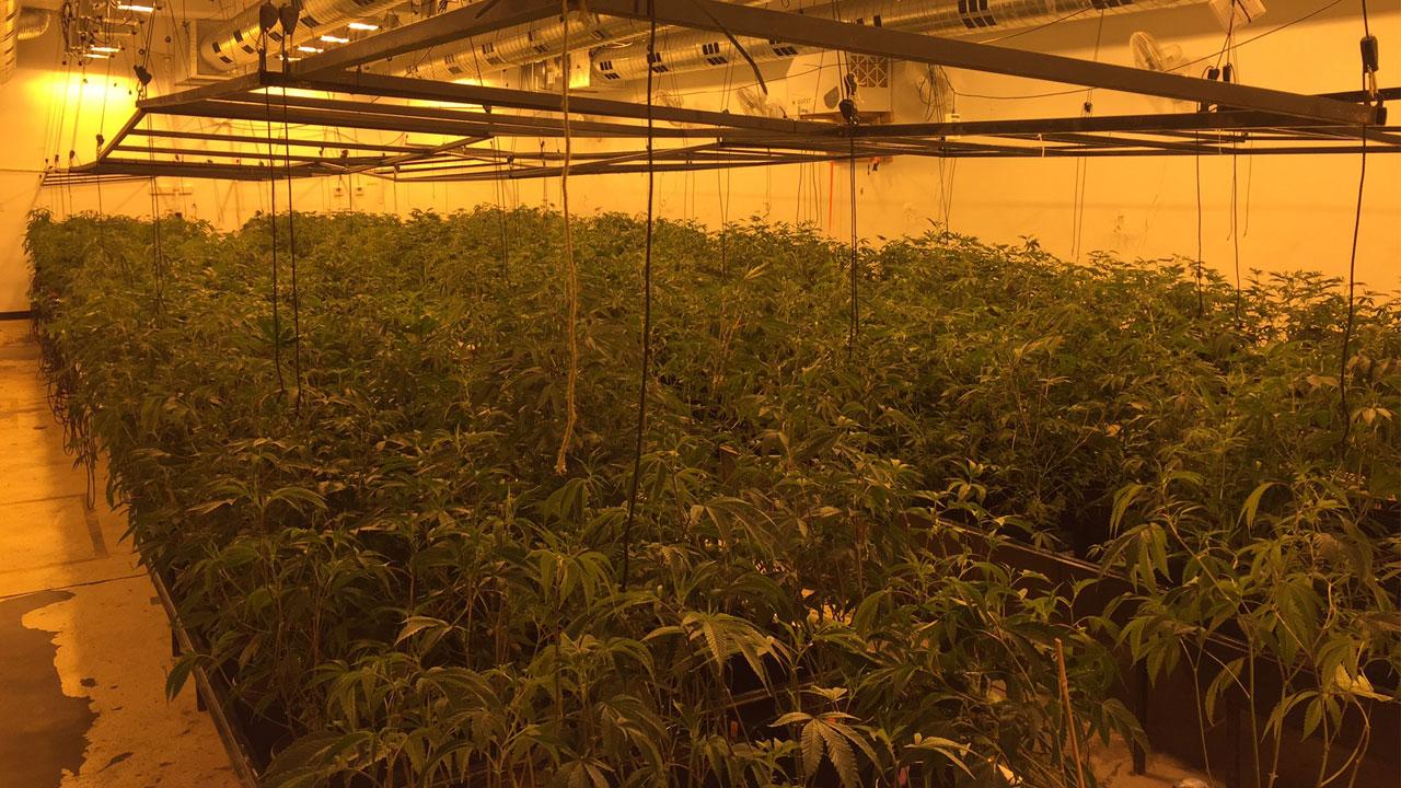 An image provided by Upland police shows hundreds of marijuana plants inside a warehouse.