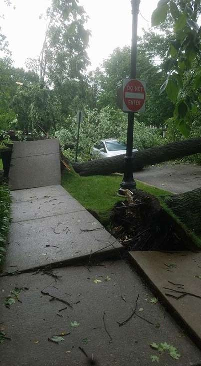 <div class='meta'><div class='origin-logo' data-origin='WLS'></div><span class='caption-text' data-credit=''>Storm damage in north suburban Evanston.</span></div>