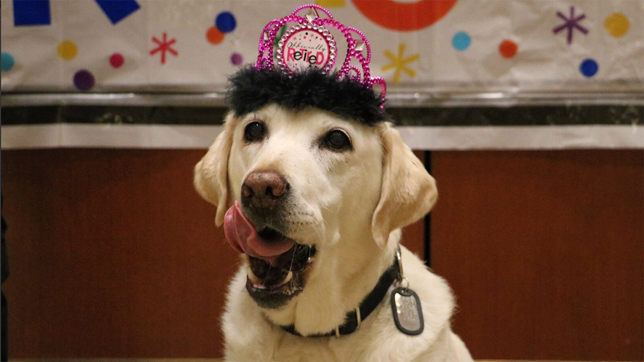 Image of Gema the service dog at her retirement party.