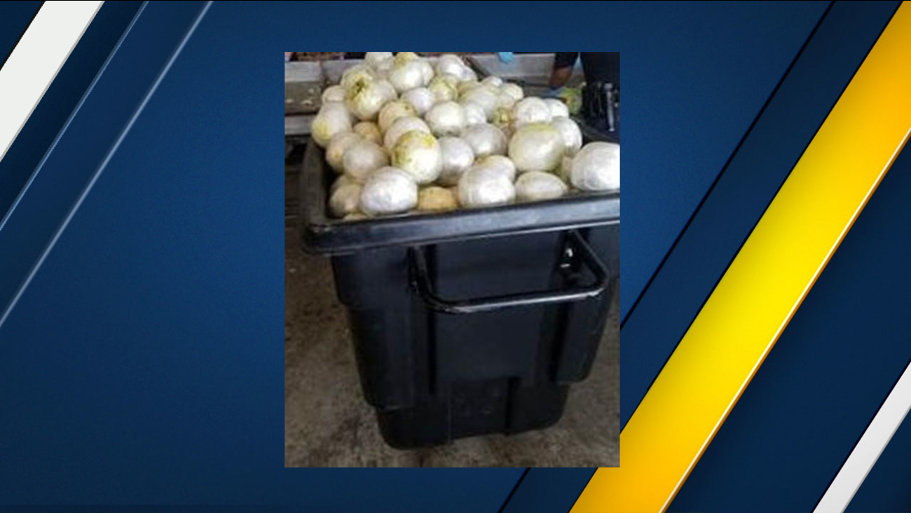 U.S. Customs and Border Protection officers seized almost two tons of marijuana hidden in a truck carrying lettuce on a bridge at the U.S.-Mexico border near Texas