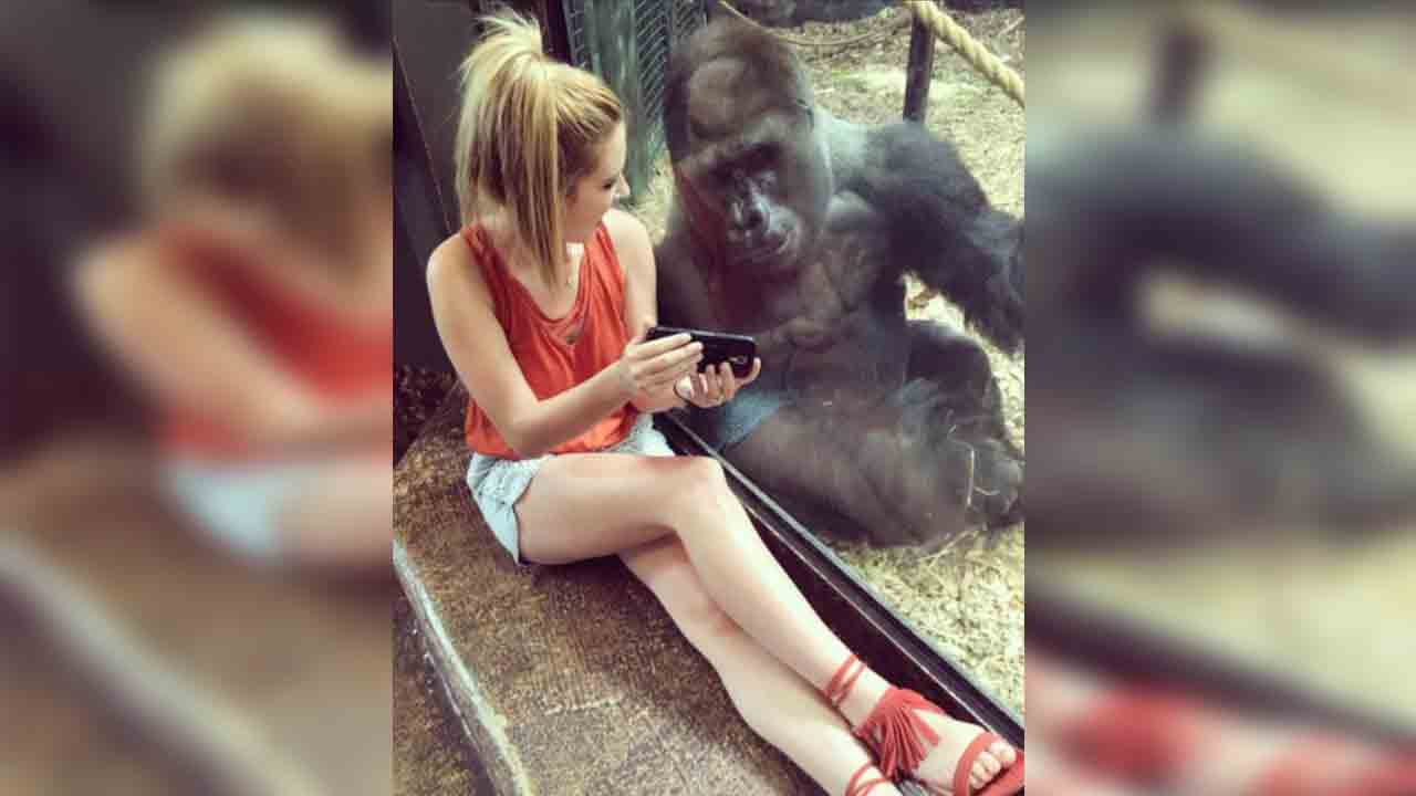 Lindsey Costello and her new friend enjoying videos of baby gorillas at the Louisville Zoo
