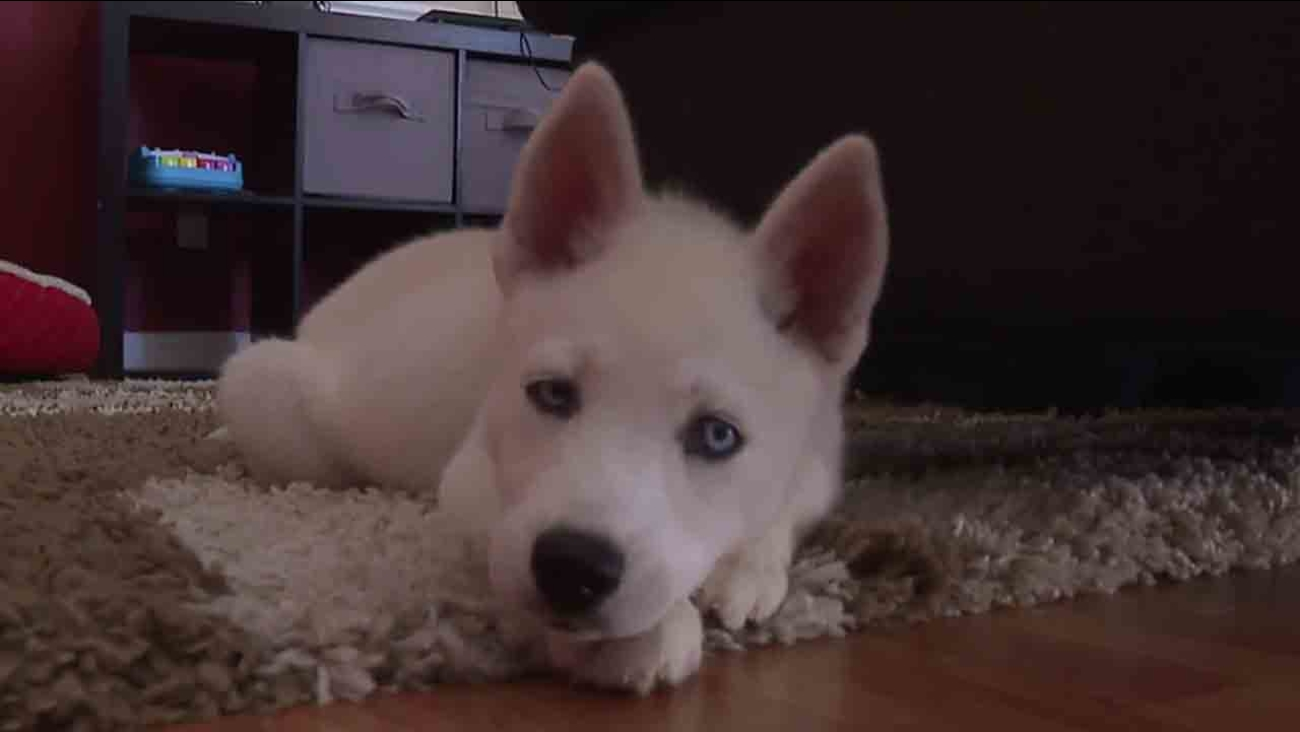 north carolina family claims craigslist puppy was infested with