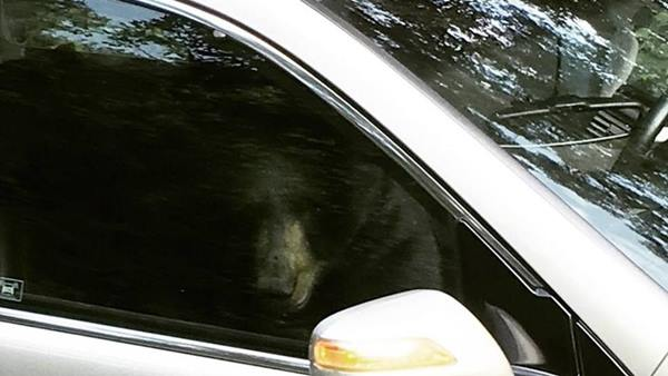 "<div class=""meta image-caption""><div class=""origin-logo origin-image none""><span>none</span></div><span class=""caption-text"">A black bear locked itself inside of a car and then destroyed the inside (Credit: Ashleigh Watkins)</span></div>"