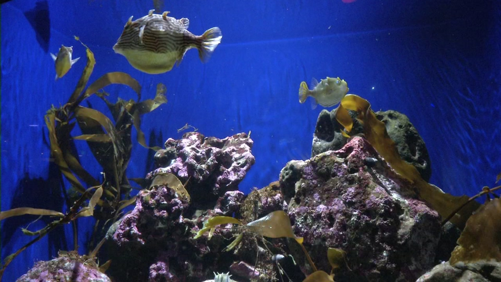 Bay Area aquariums take stand against plastic pollution ...