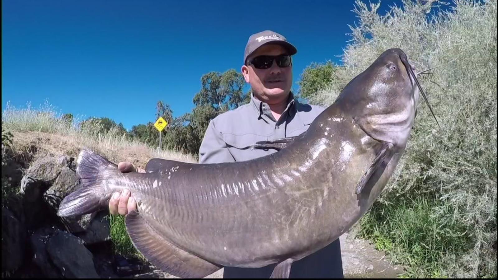 Solano County man catches colossal catfish, may break world record