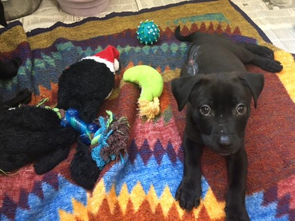 <div class='meta'><div class='origin-logo' data-origin='WTVD'></div><span class='caption-text' data-credit='DeJuan Hoggard'>The burned puppies are all set for their new homes!</span></div>