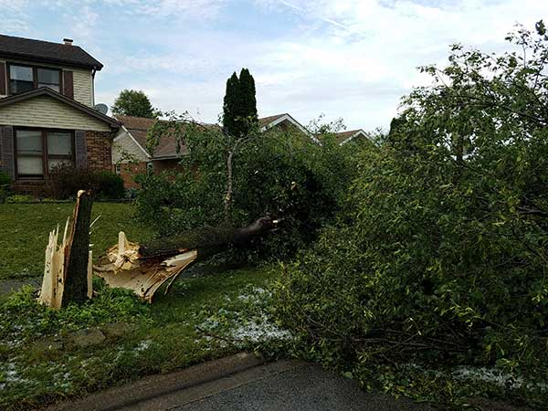 <div class='meta'><div class='origin-logo' data-origin='WLS'></div><span class='caption-text' data-credit='Joe Reyes'>Storm damage in Schaumburg, Ill.</span></div>