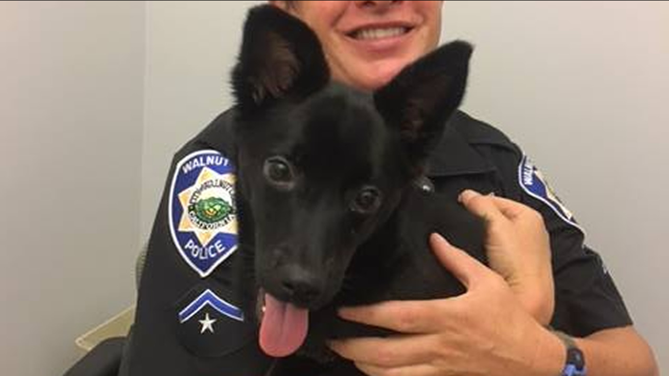 Police say this dog was rescued from a hot car in Walnut Creek, Calif. on Tuesday, Aug. 2, 2017.