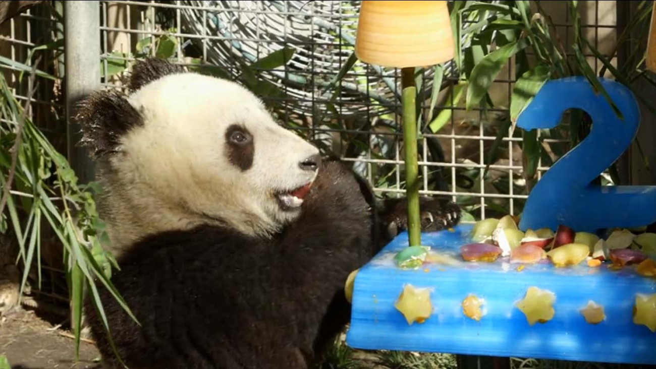 Xiao Liwu Turned 2 On Tuesday July 29 2014 And Celebrated With A