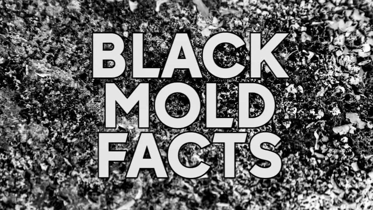 black mold what you need to know