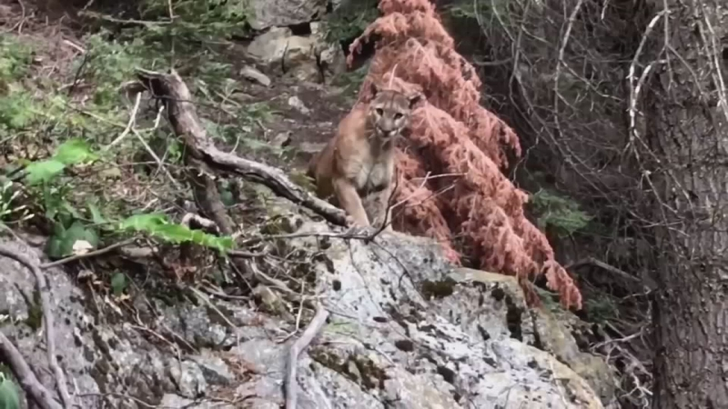 Sequoia National Park hikers capture terrifying encounter with ...