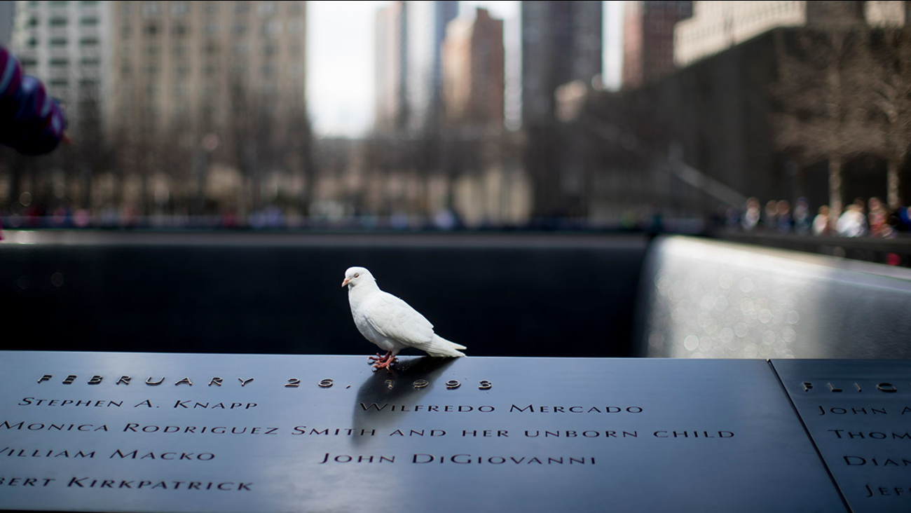 A white pigeon rests on the National September 11 Memorial North Pool, Friday, April 14, 2017, in New York.