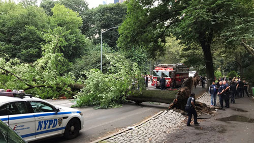 <div class='meta'><div class='origin-logo' data-origin='none'></div><span class='caption-text' data-credit='NYPD'>&#34;West Drive at 62nd Steet is closed to vehicles, pedestrians & bicycles due to a fallen tree.&#34; @NYPDCentralPark tweets</span></div>