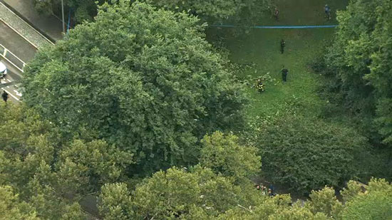 <div class='meta'><div class='origin-logo' data-origin='WABC'></div><span class='caption-text' data-credit=''>Aerial picture from the scene of the Central Park tree fall</span></div>