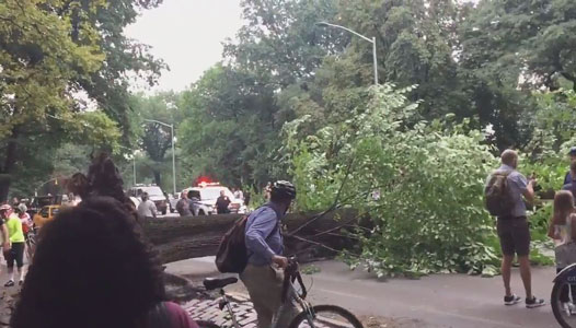 <div class='meta'><div class='origin-logo' data-origin='none'></div><span class='caption-text' data-credit='@noevandekamp / Twitter'>Spectators at the scene of the Central Park tree fall</span></div>