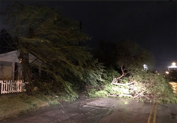 "<div class=""meta image-caption""><div class=""origin-logo origin-image none""><span>none</span></div><span class=""caption-text"">Trees block a road in Corpus Christ, Texas (Justin Horne from ABC affiliate KSAT)</span></div>"