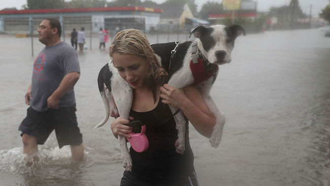 animal-rescue-natural-disaster