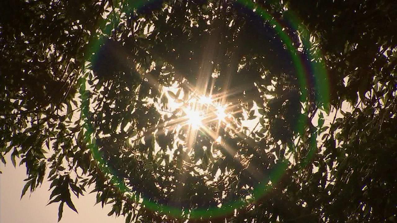 An undated photo of sun rays peeking through Southern California trees.