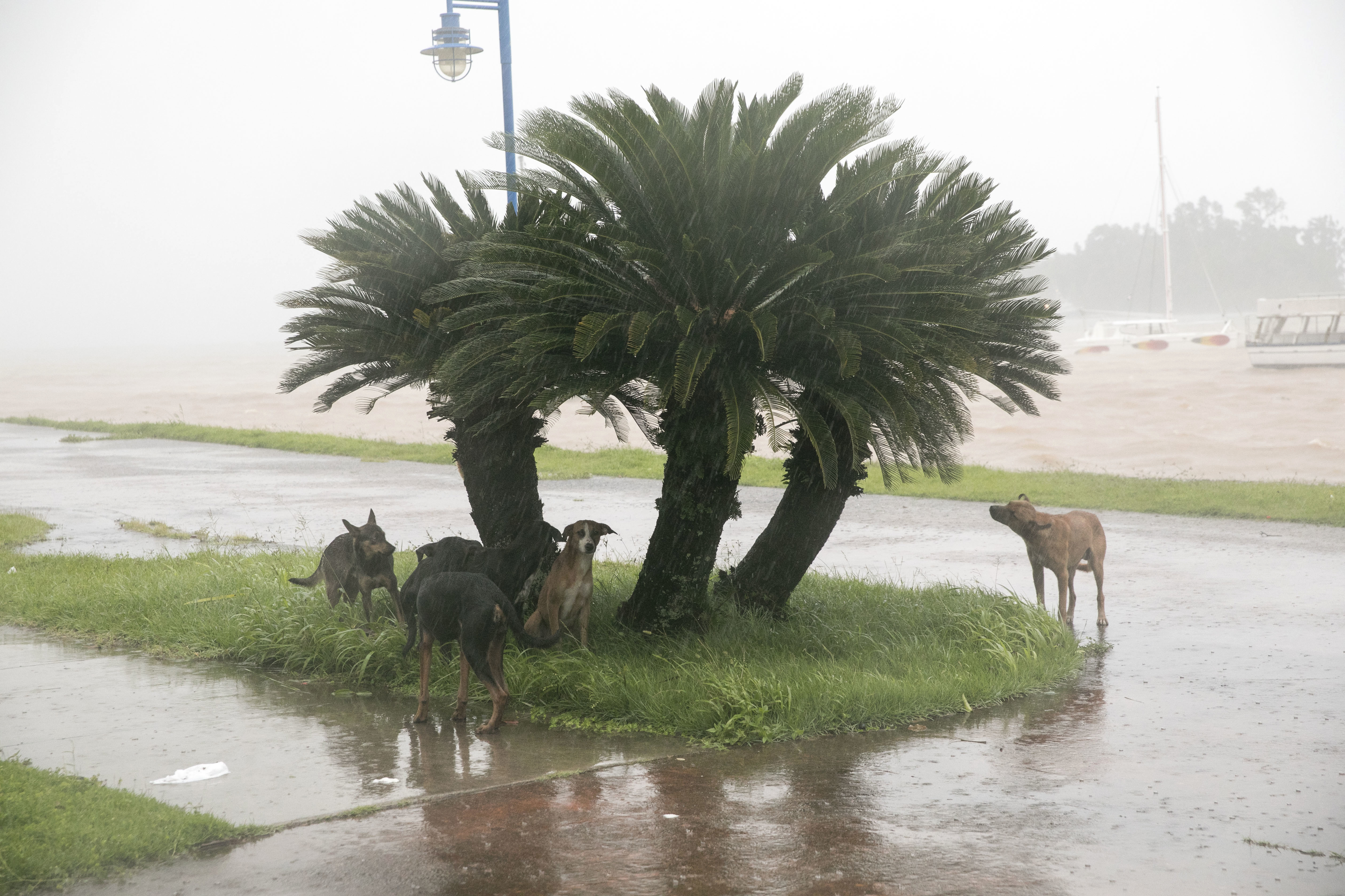"<div class=""meta image-caption""><div class=""origin-logo origin-image none""><span>none</span></div><span class=""caption-text"">Dogs take refuge from the rain as Hurricane Irma makes its entry into Samana, Dominican Republic, Thursday, Sept. 7, 2017. (Tatiana Fernandez/AP Photo)</span></div>"
