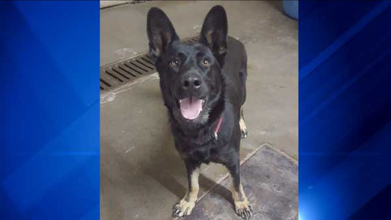 Dog found walking along I-65 in Hobart reunited with family