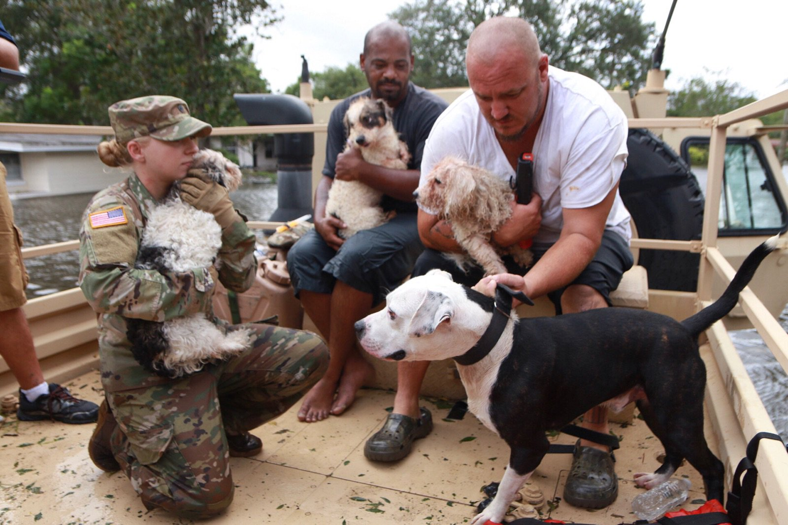 "<div class=""meta image-caption""><div class=""origin-logo origin-image none""><span>none</span></div><span class=""caption-text"">The National Guard, along with Orange County Fire and Rescue, were out rescuing pets in the storm. (OCFireRescue/Twitter)</span></div>"